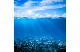 Gesundheit aus dem Meer